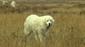 Schutzhund1 bearb