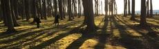 Gespensterwald 2